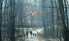 (ana_kapetan_design) Tags: tree people dog nature forest fog happiness peace