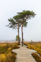 Thursley Common (THE NUTTY PHOTOGRAPHER) Tags: trees walkways marshland mistymorning mist