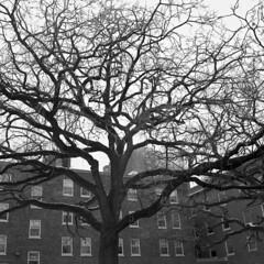 institutionalized-No2 (kaumpphoto) Tags: rolleiflex tlr 120 ilford bw black white street urban city oak wall brick minneapolis window