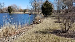 Chadwick Arboretum and Learning Gardens (dankeck) Tags: geese lake pond researchlake ohiostate theohiostateuniversity arboretum chadwickarboretum columbus ohio centralohio franklincounty