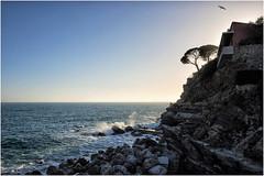 the house on the cliff ... (miriam ulivi - ON/ OFF) Tags: miriamulivi nikond7200 liguria sestrilevante scogliera cliff mare sea seagull gabbiano tramonto sunset casa house nature pinomarittimo pinuspinaster