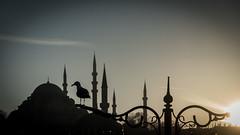 A tale from my city (Özgür Gürgey) Tags: 169 2019 24120mm d750 eminönü nikon süleymaniye architecture juxtaposition mosque silhouettes streetlamp sunset superimposed istanbul