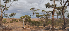 Australiana (Ian M's) Tags: lookout gums panorama dry