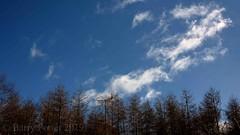 Tree line (Barry Potter (EdenMedia)) Tags: barrypotter edenmedia nikon d7200