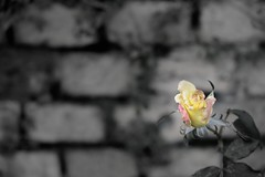 Yellow is the color (DoctorPitt) Tags: govone xmas natale 2018 mercatini piemonte italia babbonatale fuji fujifilm xt2 1855