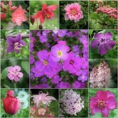 (Tölgyesi Kata) Tags: budaiarborétum withcanonpowershota620 garden budapest arboretum virág tavasz spring flower mozaik mosaic collage tulpen macro