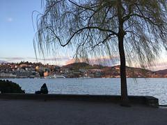 Luzern (Priska B.) Tags: luzern park see vierwaldstättersee abendstimmung bäume baum aussicht himmel iphon abend märz