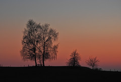 Sonnenuntergangsbankerl (Claude@Munich) Tags: germany bavaria upperbavaria badtölzwolfratshausen münsing sunset sky evening dusk twilight silhouette trees birch betula bench claudemunich bayern oberbayern sonnenuntergang abends abend abendstimmung himmel dämmerung zwielicht bäume birken bank