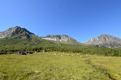 Dolomites of the north? (stormbrewer3426) Tags: sheep cabin field grass brook stream mountains peak mountain range forest birch sky blue green