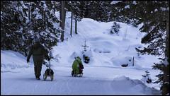 _SG_2019_01_6071_IMG_5677 (_SG_) Tags: schweiz suisse switzerland daytrip tour wandern hike hiking kandersteg lake oeschinen oeschinensee upper station heuberg panorama unterbärgli oberbärgli nature aussicht view unesco world heritage trail mountain berge loop winter ice frozen fishing cold