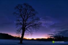 Winter Tree (john bulmer) Tags: winter tree saratoga newyork johnbulmerphotography