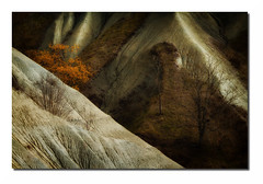 Ravin F9 Dg Bd Rd1 _MG_7717 (thierrybarre) Tags: badlands paysage landscape désert arbre