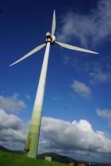 Ravenshoe_20190216_0031 (O En) Tags: wind turbines ravenshoe cows