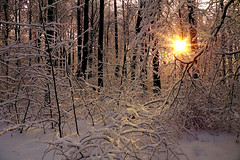 Winter morning (prokhorov.victor) Tags: утро зима природа лес пейзаж снег деревья солнце