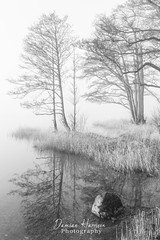 Misty morning (99damo) Tags: cumbria cloud d810 forest grass inversion lakedistrict morning mist mono nikon rocks reflections shore tree trees ullswater water blackandwhite bw sigma art