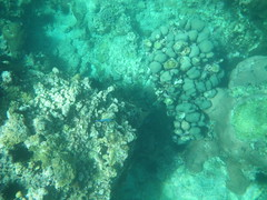 Snorkelling, Anse Chastanet - St Lucia (h_savill) Tags: 2019 february feb holiday travel vacation tourist trip explore worldwide st lucia caribbean antilles windward isle soufriere piton view landscape beach sea water marine anse chastanet ansechastanet sand ocean snorkel underwater life fish boat stlucia