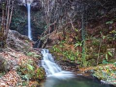 RUTA POR LAS CASCADAS DE LAMIÑA (faustoreinosa) Tags: cantabria olympus efectoseda cascada otoño arboles barcenillas agua omdem1markii ruente