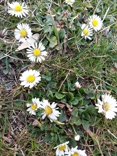 Bald wird es Frühling!!🌼🌼