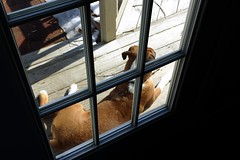 (Bob DiBono) Tags: dog sun door doors window shape light dark space shadow angular square rectangle canon 550 5 d 550d rebel t 2 i t2i dslr digital