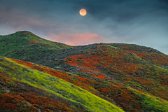 Super Moon Super Bloom! Walker Canyon Trail Lake Elsinore Poppy Reserve Poppy Apocalypse! Nikon D850 California Poppies Orange Wildflowers Superbloom Fine Art Photography! Elliot McGucken Fine Art Landscape & Nature Photography! (45SURF Hero's Odyssey Mythology Landscapes & Godde) Tags: california wildflowers superbloom fine art photography elliot mcgucken landscape nature walker canyon trail lake elsinore poppy reserve apocalypse poppies orangel nikon d850 orange super moon bloom