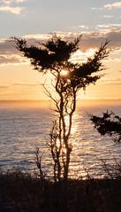 rising up (chieffoley) Tags: landscape ocean tree rhodeisland sunrise water sea newportri sachuestpoint