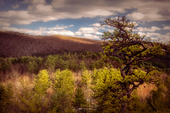 Above It All (Simmie | Reagor - Simmulated.com) Tags: connecticutphotographer d750 landscapephotographer naturephotographer nikon digital barkhamsted connecticut unitedstatesofamerica us woods forest trail greatphotographers
