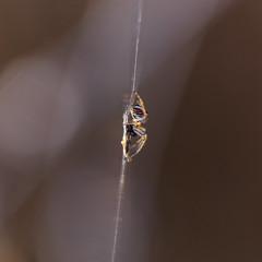 Spider web pantry (ZeGaby) Tags: araignées bokeh macrophotography naturephotography pentax100mmmacro pentaxk1 spider