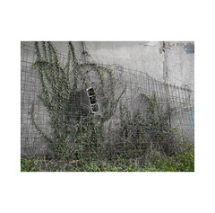 Another Brick in the Wall ...  ( Navarra ) (José Luis Cosme Giral) Tags: anotherbrickinthewall brick ivy grass yellowfowers wiremesh survivingnature textures wall olympus navarra