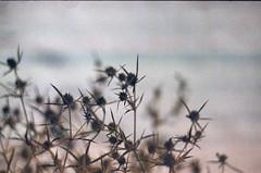 (nikita_nikiforov) Tags: zenit 122k зенит 122к плёнка плівка film 35mm analog пленка аналог 35мм bird птица птах tree дерево branch филиал відділення wildlife дикаяприрода дикоїприроди insect насекомое комаха