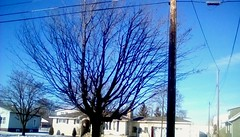 Maple tree in January! - TMT (Maenette1) Tags: maple tree january yard menominee uppermichigan treemendoustuesday flicker365 allthingsmichigan absolutemichigan projectmichigan michiganwinter