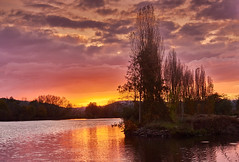 Colors of the sky (flowerikka) Tags: afternoon atmosphäre bäume colors clouds eveningmood germany magicallight mosel moselle nature perspective pastell pink purple reflection river season sky sunset trees wasser wasserspiegelungen water zusammenspiel flus sonnenuntergang himmel