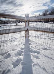 Winter Afternoon - Tenants Harbor Maine (Jonmikel & Kat-YSNP) Tags: maine winter outside backyard snow tenantsharbor fence
