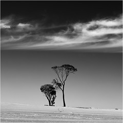 Wheatbelt trees (beninfreo) Tags: wagin wheat saltlake lakedumbleyung wheatbelt westernaustralia water lake cloudtogroundimages monochrome mono blackandwhite blackwhite bw canon polariser australia square tree trees