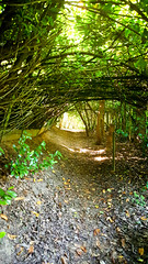 20170526_110537 (Geert Van Keymolen) Tags: bambrugge belgium belgië natuur s6edge samsung samsungs6 samsungs6edge bomen boom bos forest nature outdoor tree trees erpemere vlaanderen be
