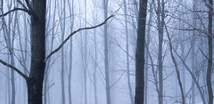 Cold Forest (Thomas James Caldwell) Tags: binky lee preserve natural lands trust chester springs pennsylvania pa nature trees usa america eerie spooky ghostly fog mist winter cold ominous