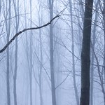 Cold Forest thumbnail