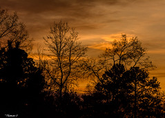 Time Is Endless, But We Aren't (that_damn_duck) Tags: nikon nature tree sunset sundown dusk clouds sky