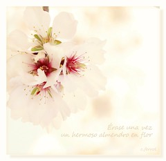 Érase una vez un hermoso almendro en flor...🌸❤ (c.ferrol) Tags: pastel soft clavealta almendro flor blanca primavera floracion blossom white sakura