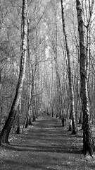 Forest (piotr_szymanek) Tags: outdoor landscape forest blackandwhite 1k 20f 5k