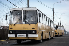 Ikarus in line (WT_fan06) Tags: cityscape urban street photography nikon d3400 dslr nikkon 7dwf flickr coth5 public transportation ikarus 280 ploiesti tce bus orange oldtimer retro vintage 2189 2120