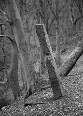 Tall Stoop, Henacre Wood (DrupkaTheUnclear) Tags: halifax westyorkshire uk winter walk woodland stoop boundarymarker tilted stone grit gritstone shibden valley telephoto shallowdepthoffield monochrome bw blackandwhite