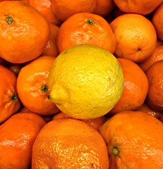 Spot the odd one out! (Sandi - (Very Busy Lady!)) Tags: jan 2019 ccversatile fruit orange lemon