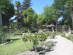 A tree for climbing,   Parque de Gasset, 1915, Ciudad Real, La Mancha (d.kevan) Tags: parksandgardens parquegasset 1915 ciudadreal lamancha paths plants trees grass streetlamps flowers roses people pergolas railings