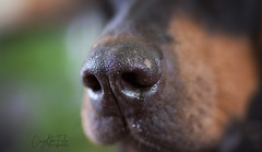The nose knows... (Riley-Dobe) Tags:
