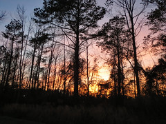 Woods At Sunset. (dccradio) Tags: lumberton nc northcarolina robesoncounty outdoor outdoors outside nature natural sunset evening eveningsky february winter goodevening saturday saturdaynight saturdayevening canon powershot elph 520hs tree trees treebranch treebranches branch branches treelimb treelimbs beauty scenic woods forest wooded settingsun eveningcolors daylightends eveningbegins silhouette