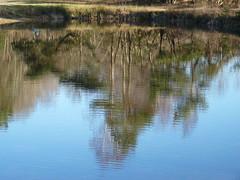 head over heels (achatphoenix) Tags: tunxdorf tunxdorferwaldsee wald waldsee see water wasser eau aqua trees arbres february februar