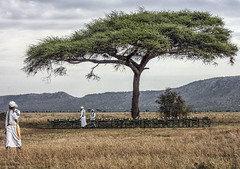 Breakfast Setting after Serengeti Balloon Ride (raddox) Tags: africa tanzania serengeti balloon