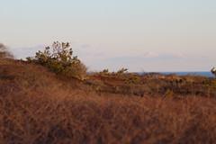 Marconi Duneside (NatureChaserPhotos) Tags: marconi wellfleet capecod trees sunset beach dune dunegrass sky ocean nature