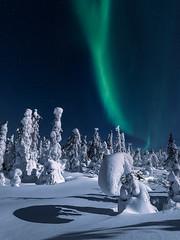 20190221_north_0114 (Andrei Baskevich) Tags: auroraborealis aurora northernlight winter trees frost frozen light night