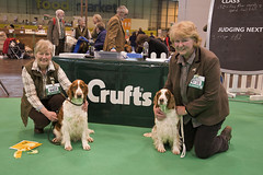 Diary_2016_044 (evinrisca) Tags: crufts welsh springer spaniel dogshow wsscsw